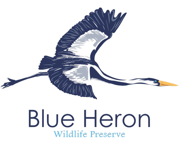 The Ranches Partner - Blue Heron Wildlife