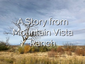 A Story from Mountain Vista Ranch